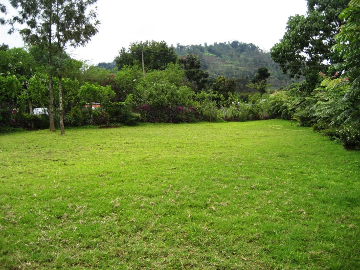 Green open space for camping