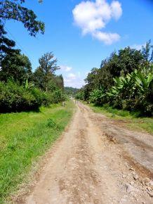 The Road to Kimundo